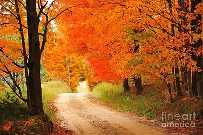 Poster featuring the photograph Autumn Trail by Terri Gostola