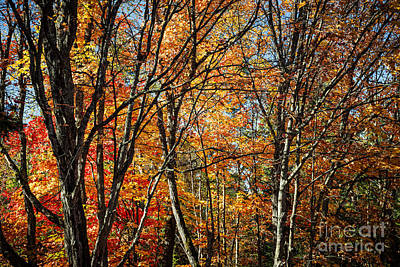 Autumn Trees Poster by Elena Elisseeva