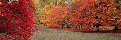 Autumn Trees In Westonbirt Arboretum Poster by Panoramic Images