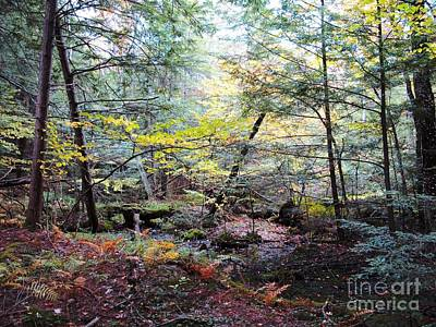 Autumn Woods Poster by Linda Marcille