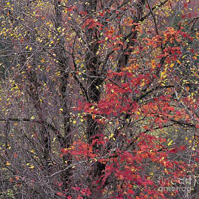 Poster featuring the photograph Autumn's Palette by Alan L Graham