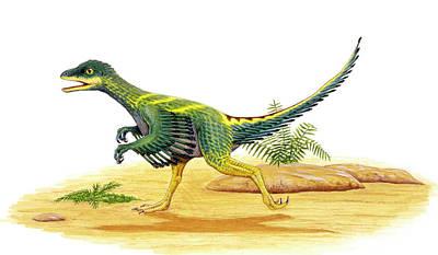 Avimimus Dinosaur Poster