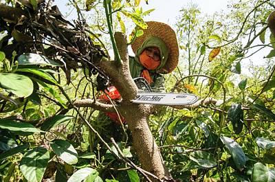 Avocado Plantation. Poster by Photostock-israel