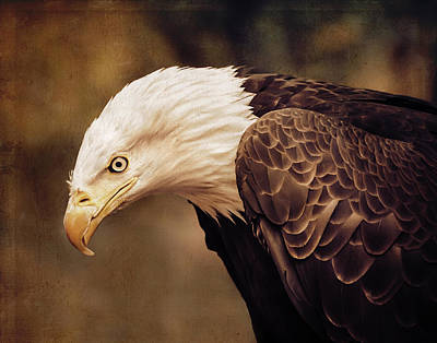 Bald Eagle Poster by Marion McCristall