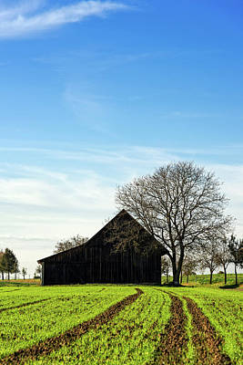 Barn And Green Agricultural Field Poster