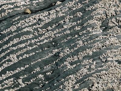 Barnacles On Rocks Poster