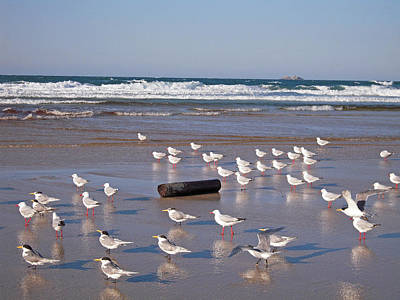Poster featuring the photograph Beach Birds by Ankya Klay