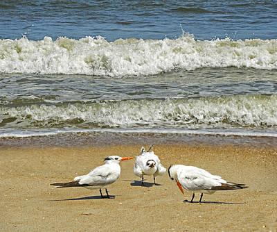 Beach Birds Poster by Steven Michael