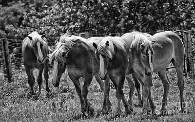 Belgian Draft Horses Poster by Wilma  Birdwell