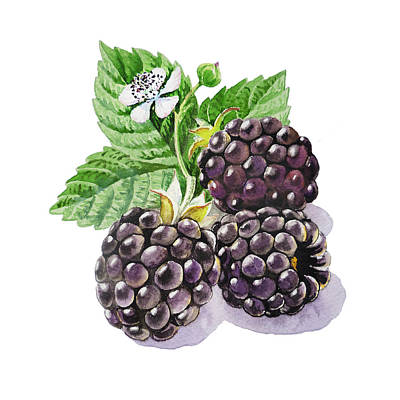 Artz Vitamins Series The Blackberries Poster by Irina Sztukowski
