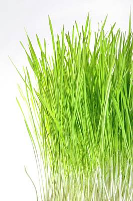 Blades Of Wheatgrass Poster
