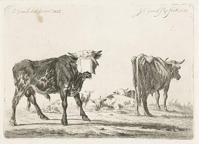 Blindfolded Bull To Herd Cattle, Jacobus Cornelis Gaal Poster by Jacobus Cornelis Gaal