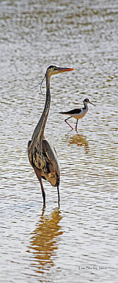 Blue Heron And Stilt Poster