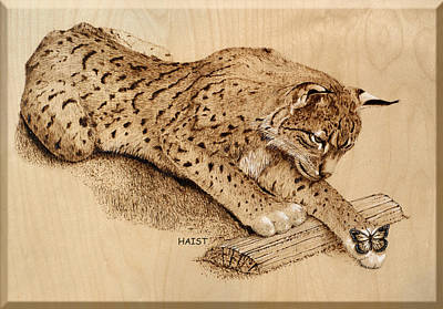Bobcat And Friend Poster by Ron Haist