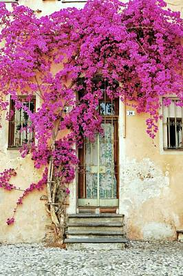 Bougainvillea Doorway Poster
