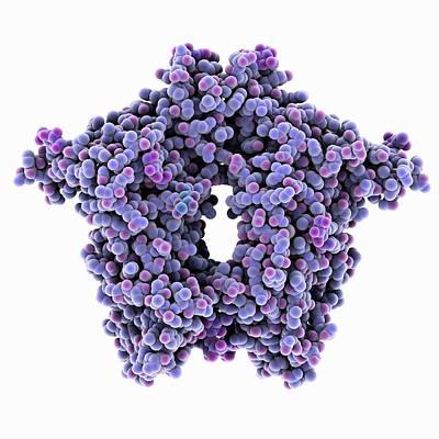 Bovine Coronavirus Enzyme Poster