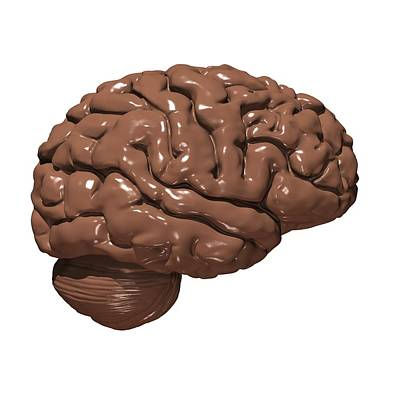 Brain Made Of Chocolate Poster by Russell Kightley