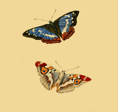 British Butterflies Poster