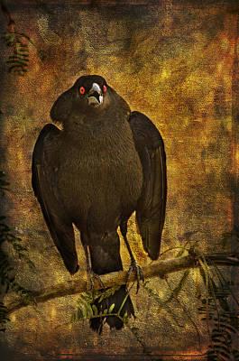Bronzed Cowbird Poster