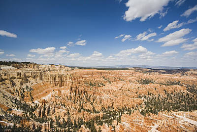 Bryce Canyon National Park Poster by David Davis
