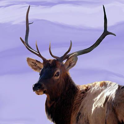 Bull Elk Freehand Poster