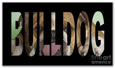 Bulldog Poster by Marvin Blaine