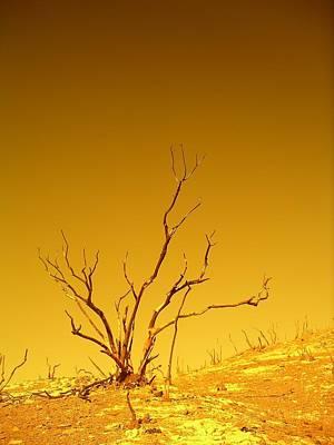 Burnt Bush Poster