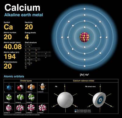 Calcium Poster by Carlos Clarivan