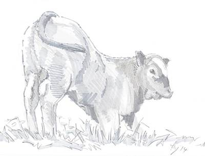 Calf Drawing Poster by Mike Jory