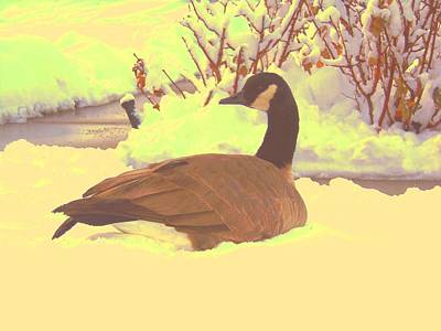 Canadian Goose Poster by Larry Campbell