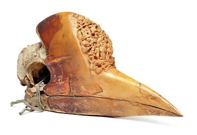 Carved Hornbill Skull Poster