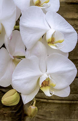 Cascade Of White Orchids Poster by Julie Palencia