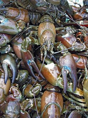 Caught Crayfish Poster by Bjorn Svensson