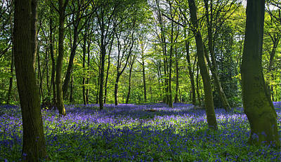 Chalet Wood Wanstead Park Bluebells Poster by David French