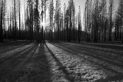 Charred Silence - Yosemite Rim Fire 2013 Poster