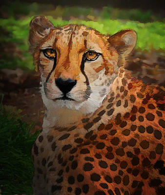 Cheetah Mama Poster