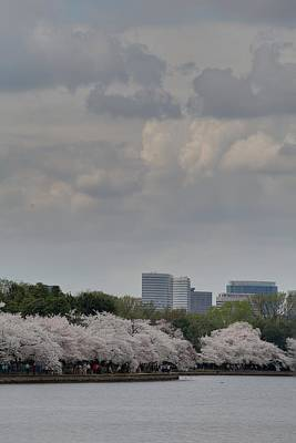 Cherry Blossoms - Washington Dc - 011313 Poster by DC Photographer