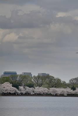 Cherry Blossoms - Washington Dc - 011317 Poster