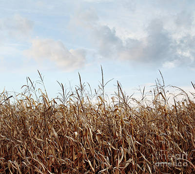 Poster featuring the photograph Closeup Of Corn Stalks  by Sandra Cunningham