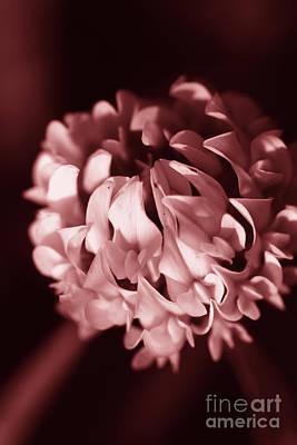 Clover Flower Poster