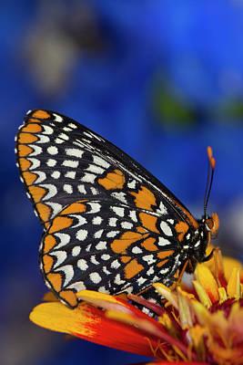 Colorful Baltimore Checkered Spot Poster
