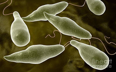 Conceptual Image Of Euglena Poster by Stocktrek Images