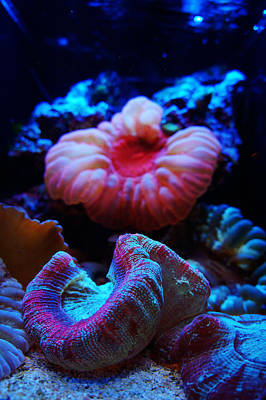 Coral Reef Creatures Poster