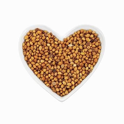 Coriander Seeds Poster by Geoff Kidd
