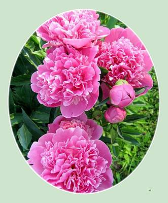 Country Peonies Poster