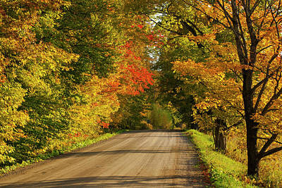 Country Road In Autumn  West Bolton Poster by David Chapman