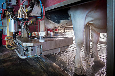 Cow's Udder In Milking Machine Poster