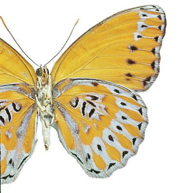 Crenidomimas Concordia Poster by Natural History Museum, London