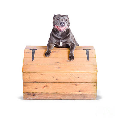 Cute Dog On Vintage Wooden Chest Poster by Jorgo Photography - Wall Art Gallery