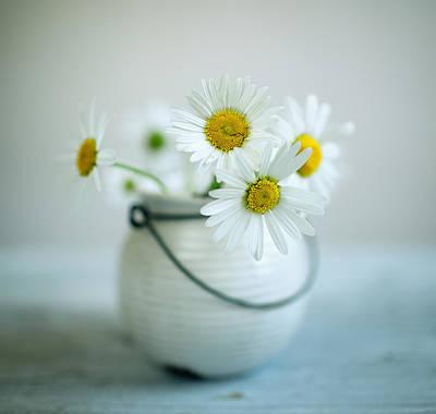 Daisy Flowers Poster by Nailia Schwarz